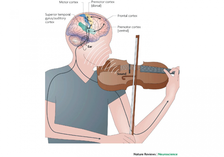 3022942-inline-i-3-music-and-our-brains